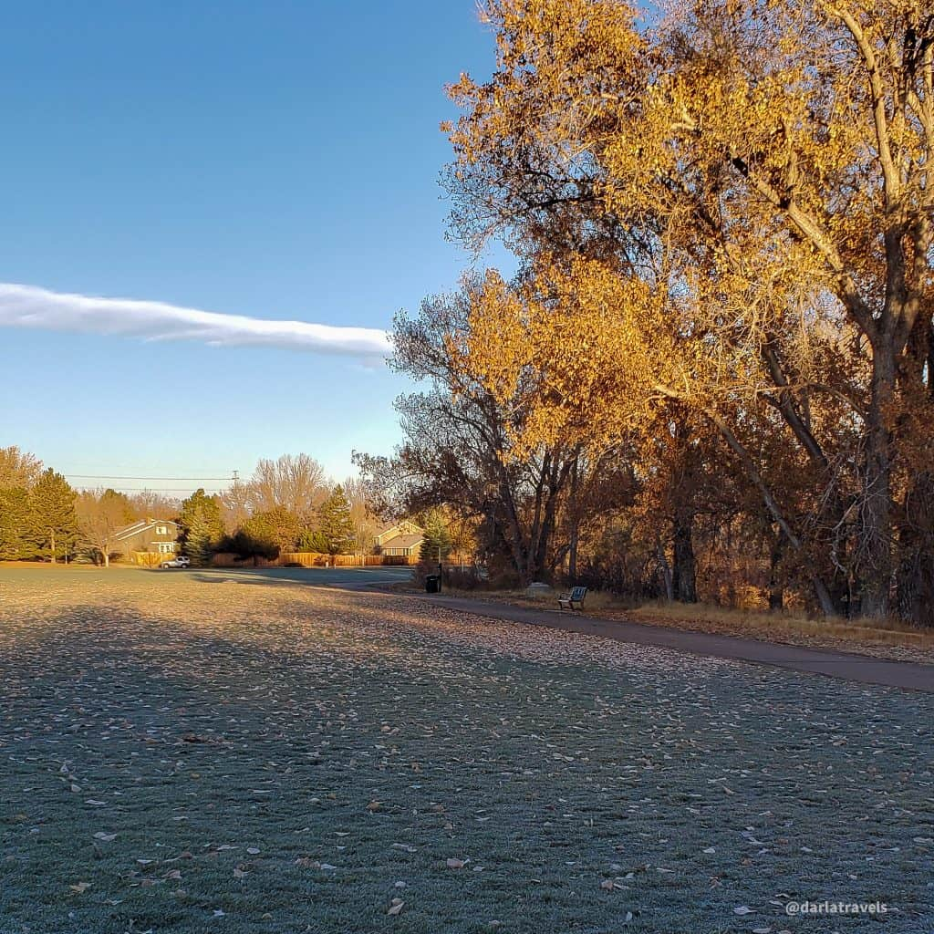 Willow Creek Park, Centennial, CO on a fall morning. Cottonwood trees with yellow leaves; frost on the ground with fallen leaves
