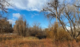 View from the Big Dry Creek Trail, Englewood, CO, Fall, prairie grasses, trees