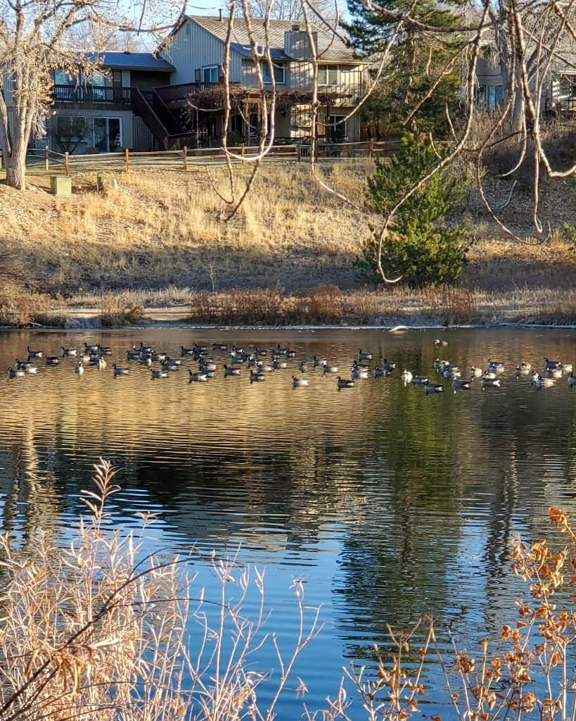 Cherry Knolls Park pond with waterfowl, fall