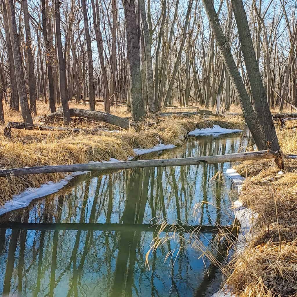 Cherry Creek in the Wetlands Preserve area of Cherry Creek State Park, winter