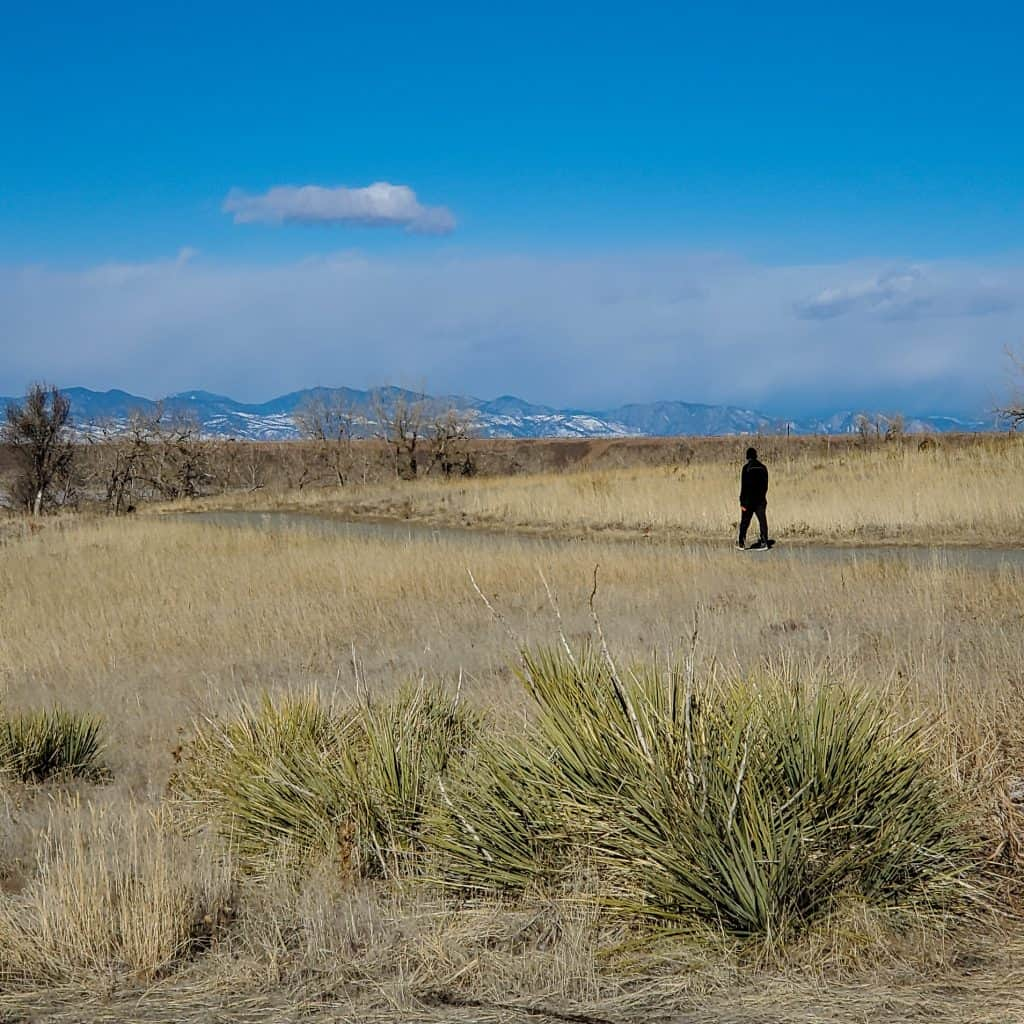 hiker on a trail in Cherry Creek State Park, Aurora, Colorado. Agave in the foreground, view of the Rocky Miountains